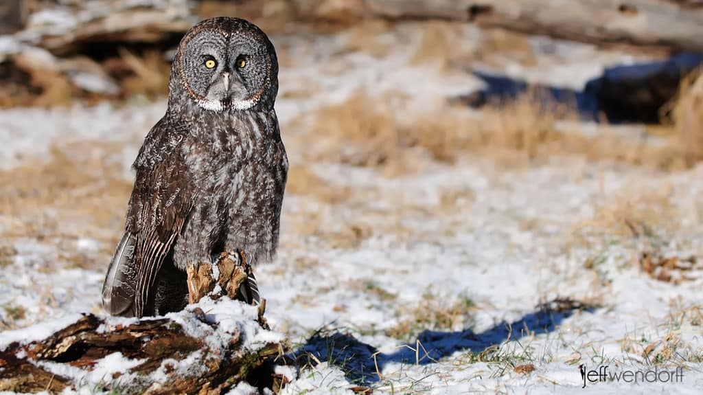 Top 10 Reasons Bird Photography Models are Perfect