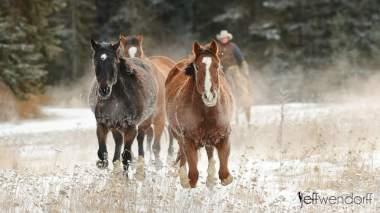 Horse Roundup - Winter Wildlife Photography Workshop