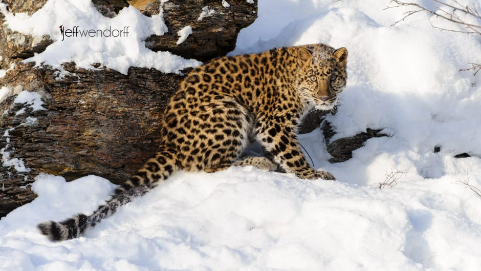 Announcing Winter Wildlife Photography Workshop 2014