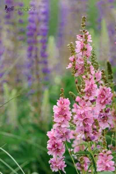 Oregon Flower Photography