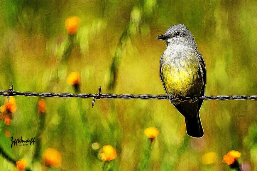 Western KIngbird on barbwire ina ffield of wildflwoers created with TangledFX by Jeff Wendorff