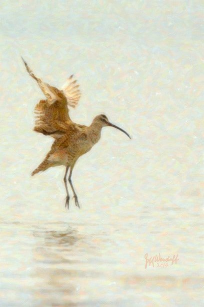 Foggy Morning - Whimbrel created from a photograph by Jeff Wendorff
