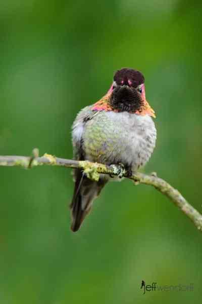 Bird Photography Tip – Use Your Yard