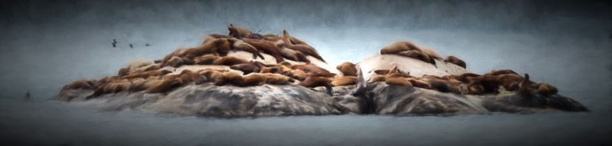 Painting of a small island haul out covered with Stellar Sea Lions created from a photo by Jeff Wendorff