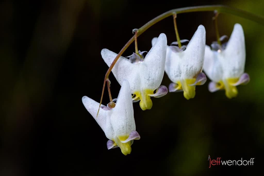 Oregon Wildflowers – Eagle Creek