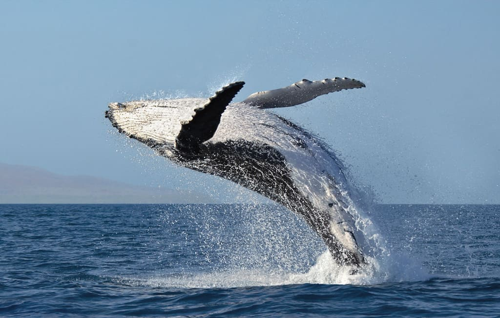 Photography Workshop – Whales and More – Maui
