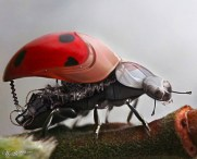 ladycybug