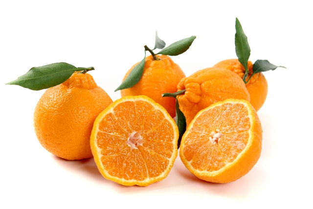 نتيجة بحث الصور عن jeju mandarin