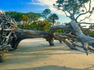 Driftwood - 4
