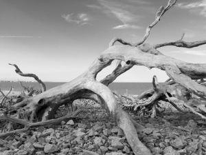 Driftwood - 7