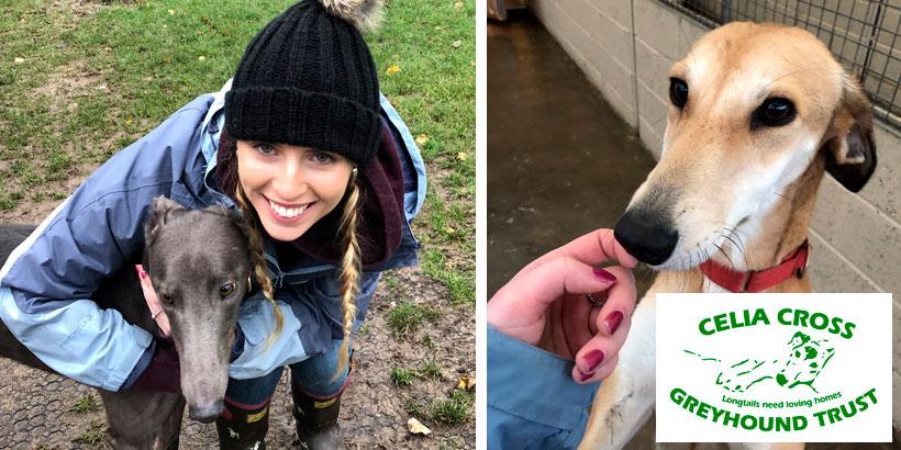 Foodservice Marketing Agency - Hannah Burchell – Celia Cross Greyhound Trust – Jellybean's 12 Days of Giving