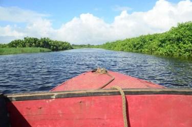 Pirogue aux marais de Kaw, Guyane