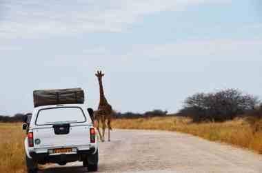 Girafe et 4x4 Nissan en Namibie