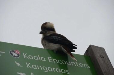 Signalisation au zoo Taronga Sydney