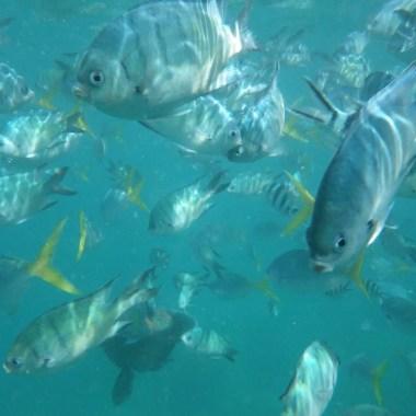 Plongée dans les Whitsundays Australie