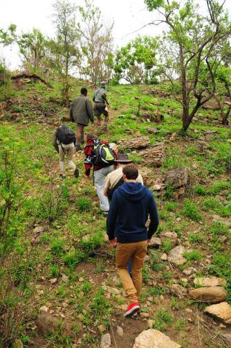 En file indienne pour la morning walk Kruger Park Afrique du Sud