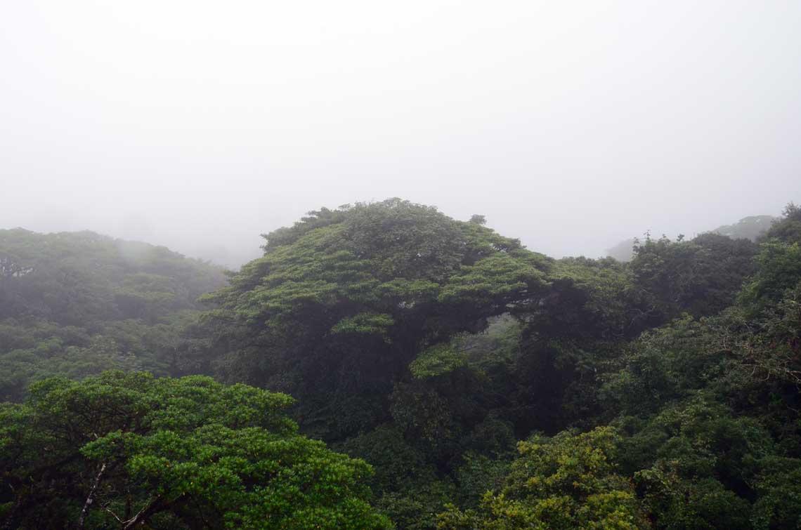 Vue de la canopée du dessus, Monteverde, Costa Rica