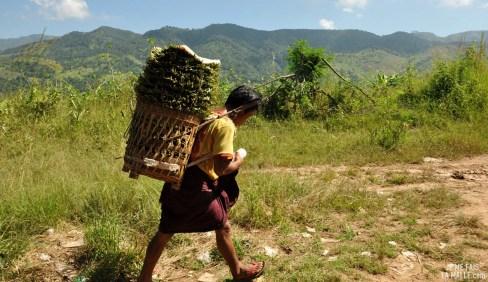 Transport de céréales
