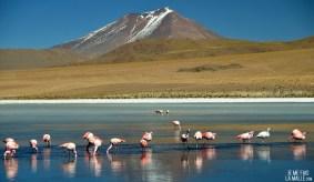 Laguna Verde, Bolivie
