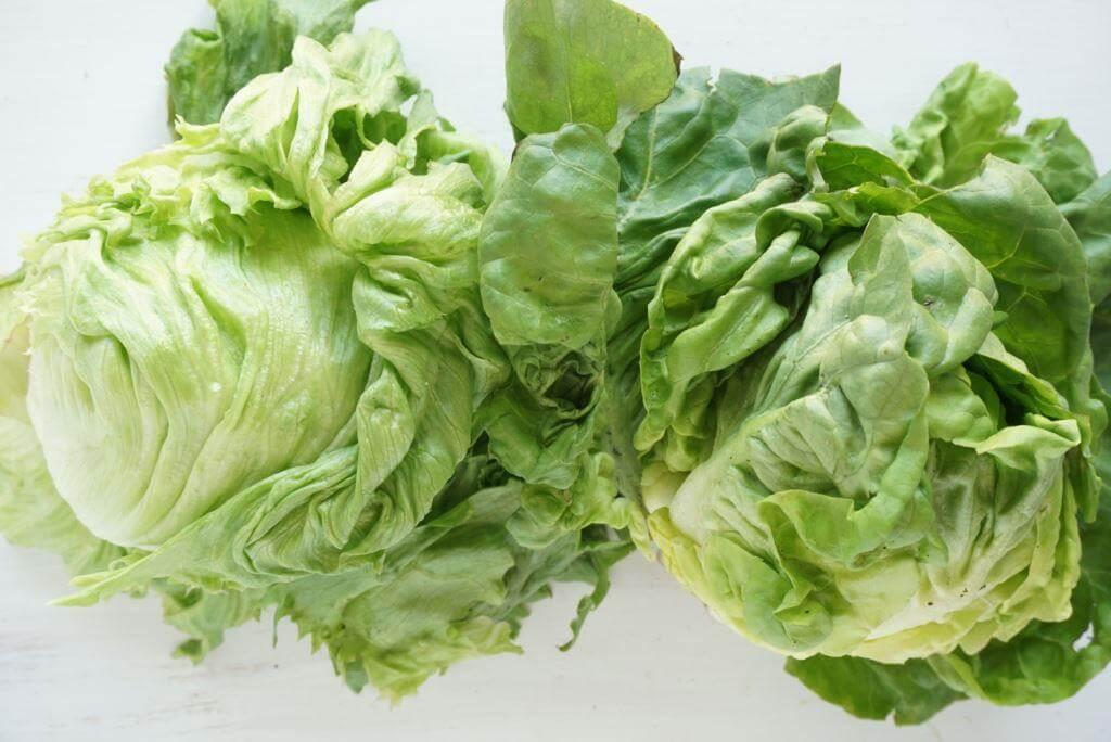 Homegrown Iceburg Lettuce