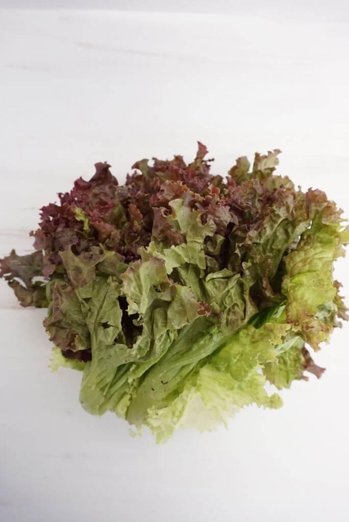 Week 2 Bibb Lettuce