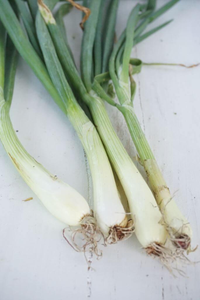 Onions CSA Box