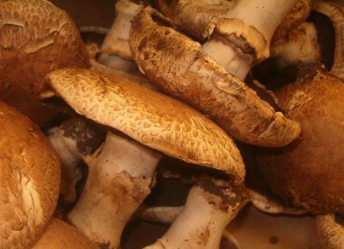 Life is Too Short to Stuff a Mushroom
