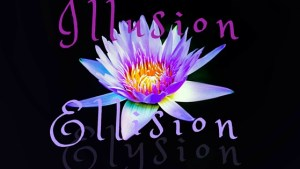 Ellision (1)