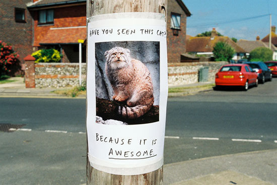 Have you seen this cat because it's awesome.