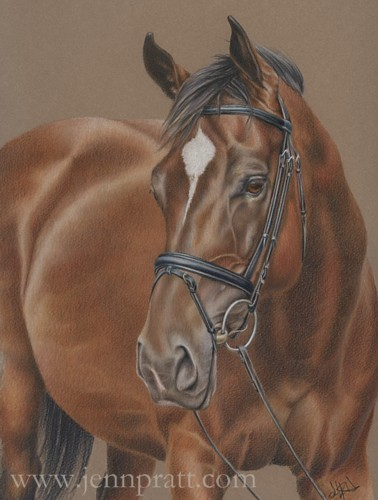Gilly, 11x14 Coloured Pencil on Canson
