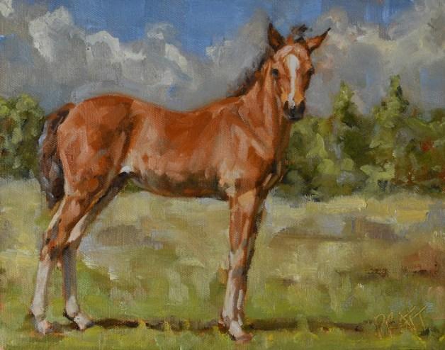 equine art, foal, sport horse, allla prima