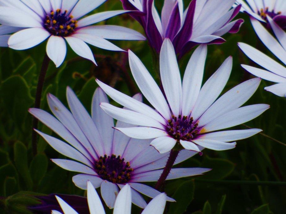 Tasmania coastal wild flora