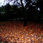 Ballarat Autumn Leaves Bed
