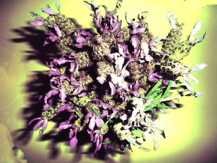 lavender purple retro