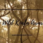 A Stark Silhouette Wild Koala in Mt Buninyong