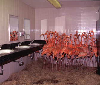 Flamingos in bathroom Ron Magill