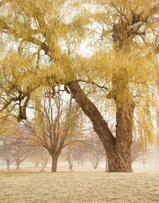 An Unexpected Journey - Autumn Landscape Photograph