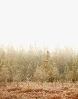 Blushing Bog - Autumn Landscape Photograph