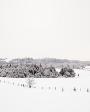 Winter Scene Photo - Frosty Fields