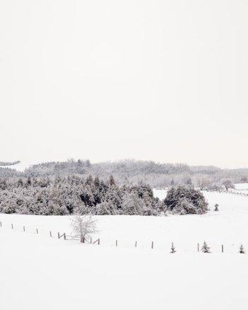 Winter Scene Photo - Frosty Fields
