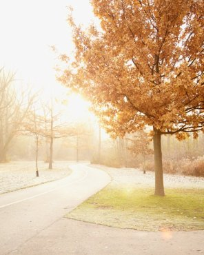 Morning Run - Autumn Landscape Photograph