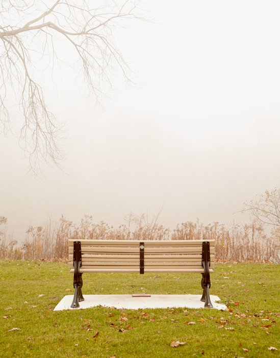 Unbridled Wonder - Park Bench Photograph