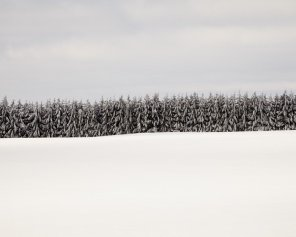 Winter Landscape Photo - Where The Wild Things Are