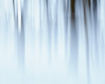 Abstract Forest Wall Art - Indefinite Winter by Jennifer Squires