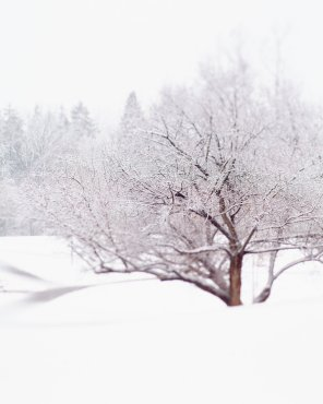 Nordic Art Print - Tangled Winter Web - Landscape Photograph