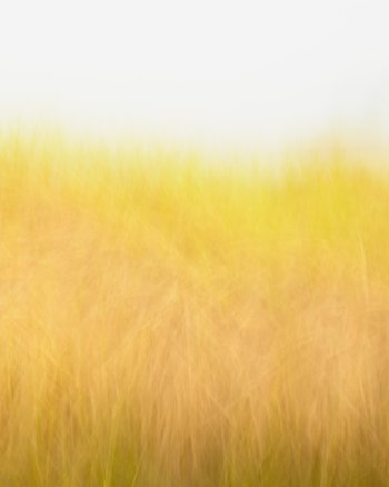 Sunshine and Breeze - Golden Beach Grass Picture by Jennifer Squires