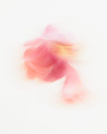Farrah - Abstract Flower Art