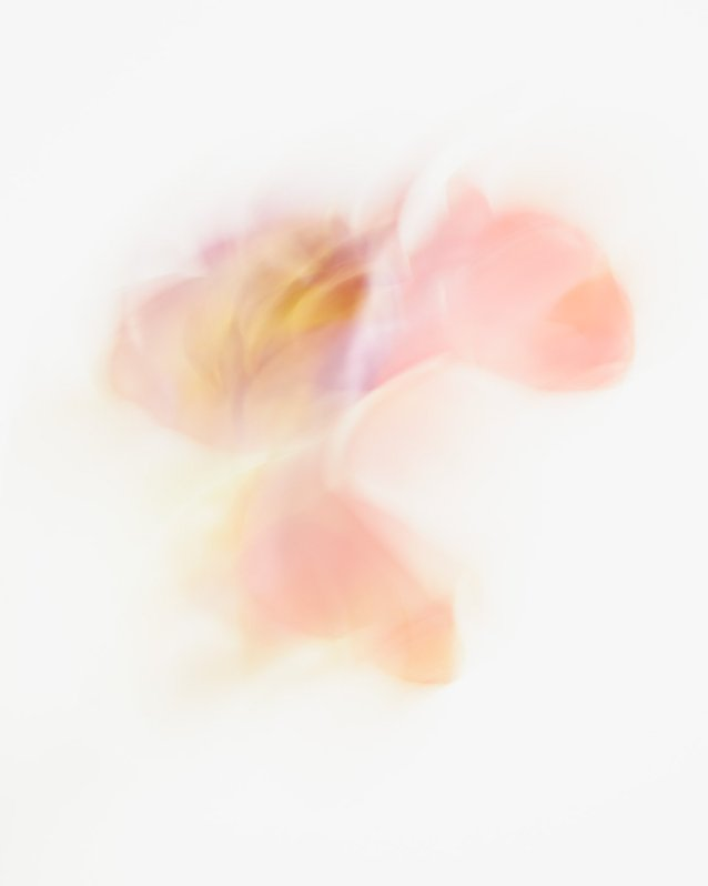 Rachel - Abstract Flower Picture