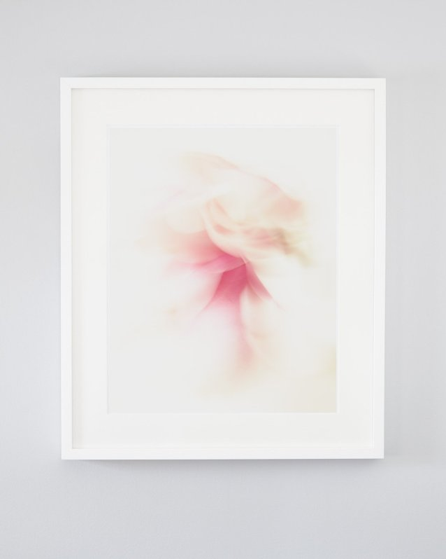 Kayla - Pink abstract nature art of pink and white magnolia flowers