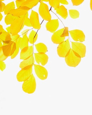 Droplets of Gold - Autumn Leaves Wall Decor Art Print